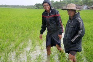 Demonstration paddy plot